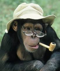 In trouble with the Hat monkey | The Fedora Lounge