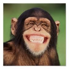 Chimpanzee Smiling Gifts on Zazzle